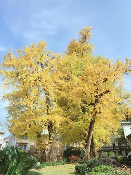 探寻秋的美丽 ——记18年11月桐庐古村团建活动